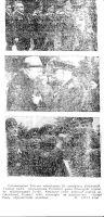 """Fotod Tallinna vabastamise 25. aastapäeva tähistamisest Tõnismäel asuva pronkssõduri juures, """"Punane Täht"""" 21.10.1969."""