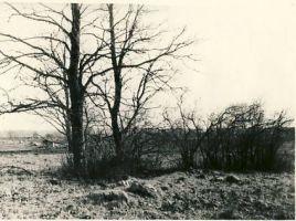 Tuudur Vettiku sünnikoht, 1960. aastad. RM F 1346:5, SA Virumaa Muuseumid, http://www.muis.ee/museaalview/1388564.