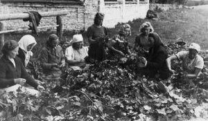 Tammelehtedest vanikute tegemine kiriku 100. juubeli tähistamiseks, 11.10.1943. Erakogu.