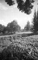 Kaugvaade Mõdriku mõisaansamblisse kuuluvale nn Täkusambale - Plevna lahingus 1877. aastal langenud F. K. von Kaulbarsi ausambale, 1996. EVM N 380:213, SA Eesti Vabaõhumuuseum, http://www.muis.ee/museaalview/2139493.