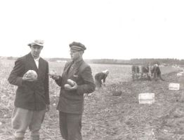 Taimo Uuetalu (pildil vasakul) 1950-ndatel sovhoosi kartulipõllul.